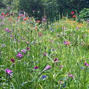 Nye frøposer skal gøre danskernes haver vildere og insektvenlige
