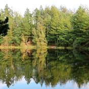 Klimarådet vil sikre mere natur og skov i kampen mod klimaforandringerne