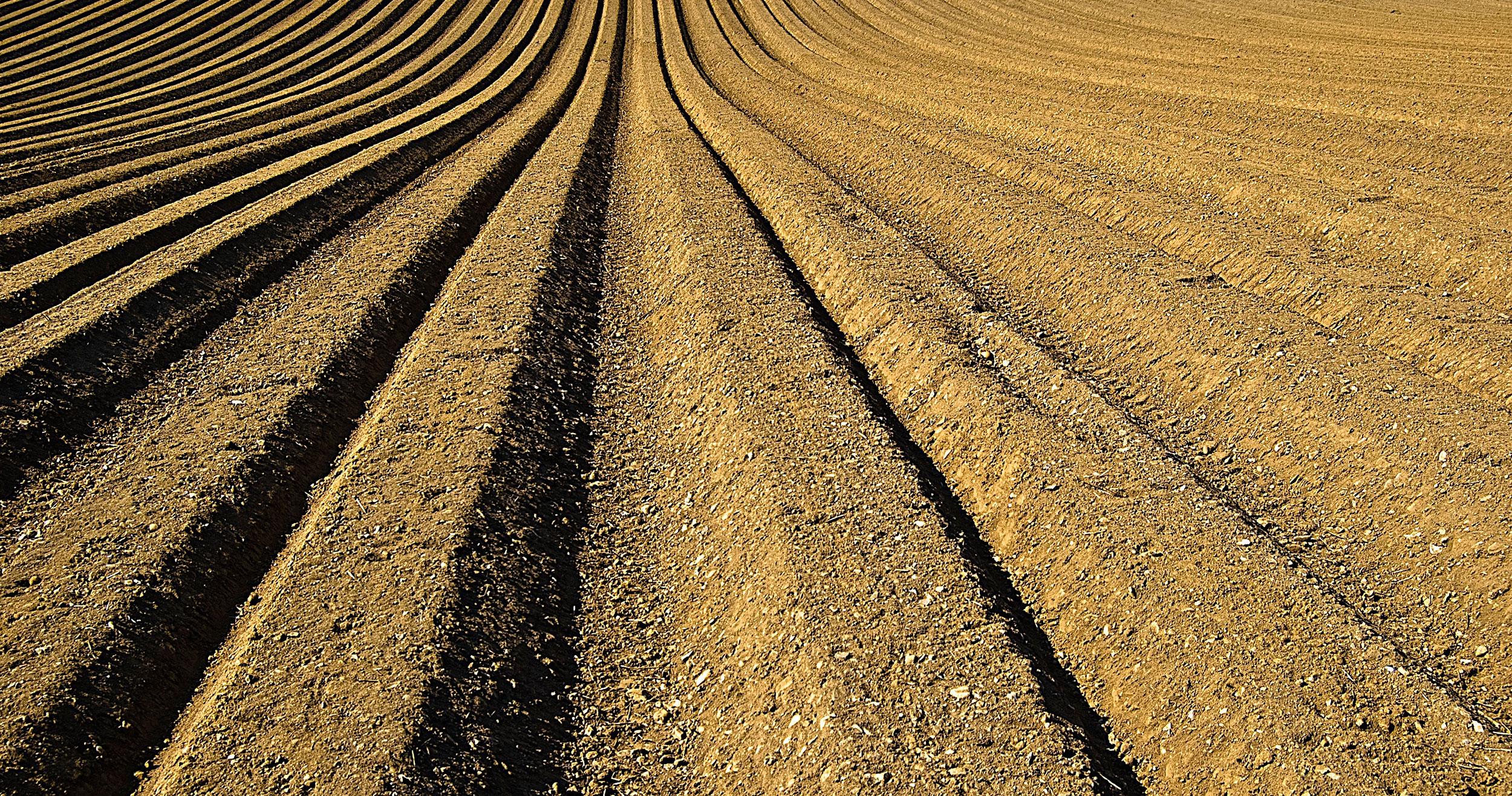 Dyrkede marker bliver til klimagavnlig natur
