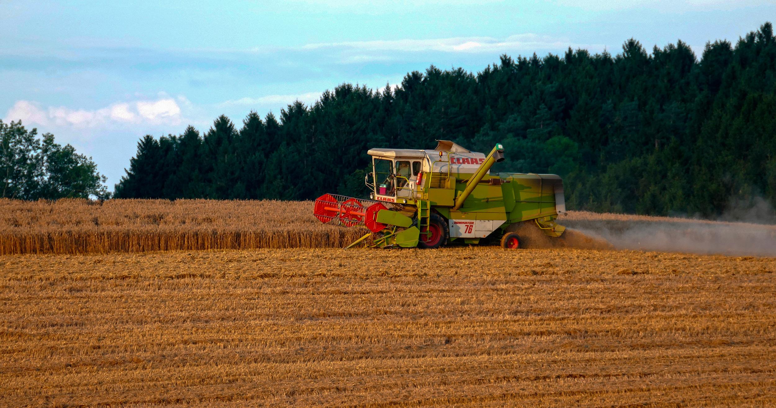 Biodiversitetskrise: Landbrug tager plads fra naturen