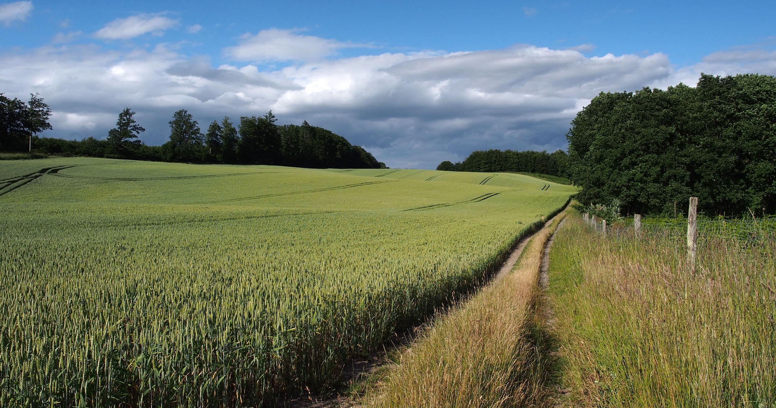 Ny rapport: Den danske natur har fået det værre