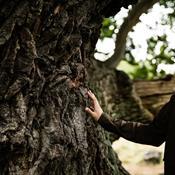 Evighedstræer