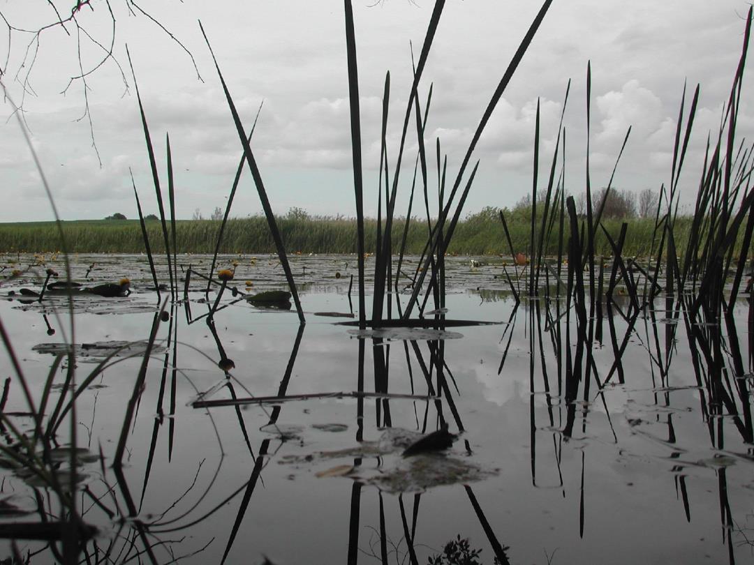 Engene ved Gundsømagle Sø med kig på selve søen