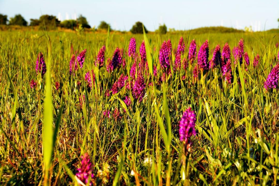 De Vilde Blomsters Dag til orkideområderne ved Hundige Strand