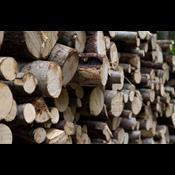 Produktion af træ