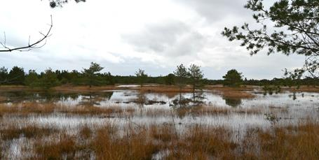 Regeringens klimarådgiver vil omdanne landbrugsarealer til natur