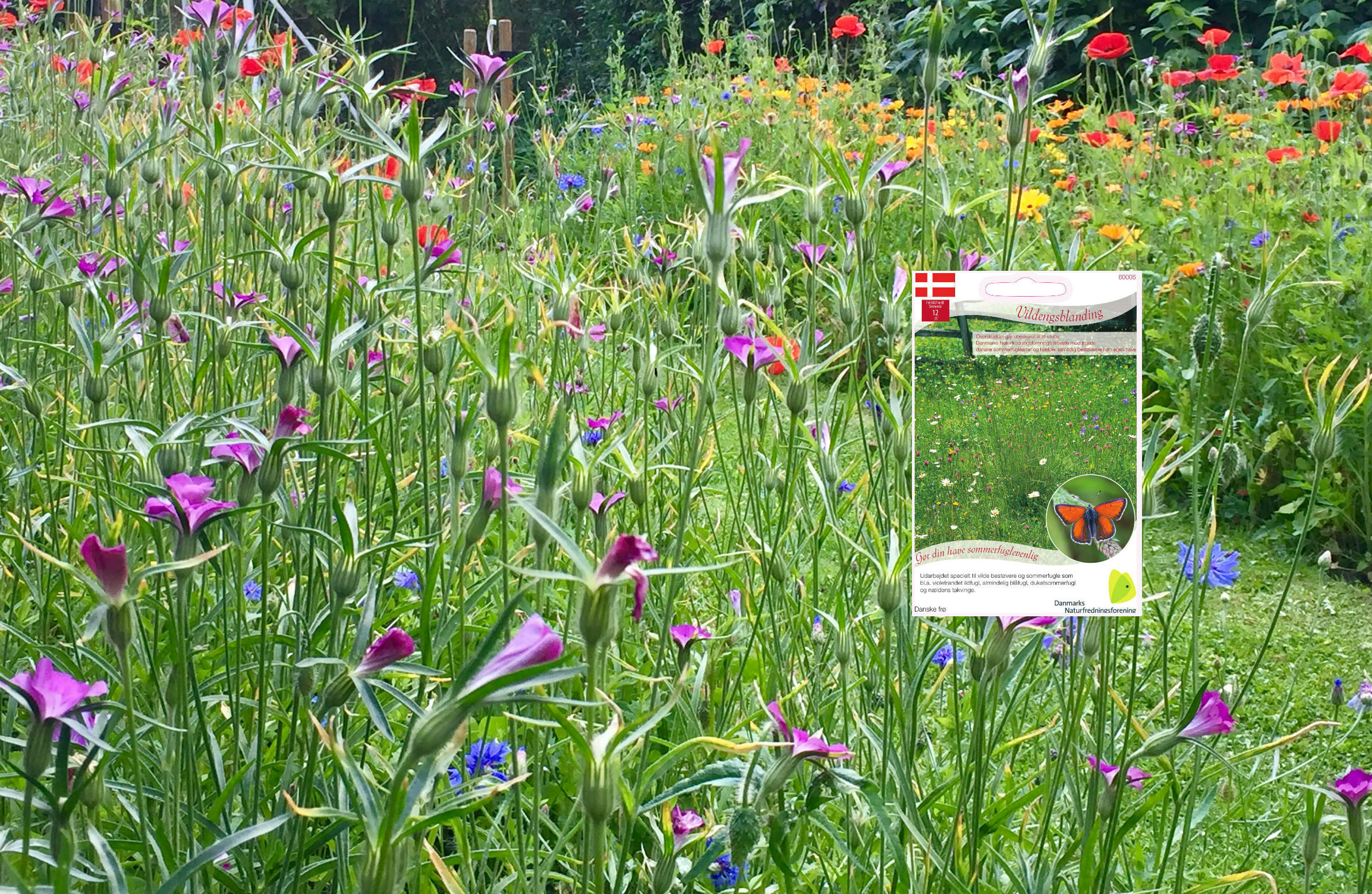 Vildeng hitter i haverne: Frøposer bliver revet væk