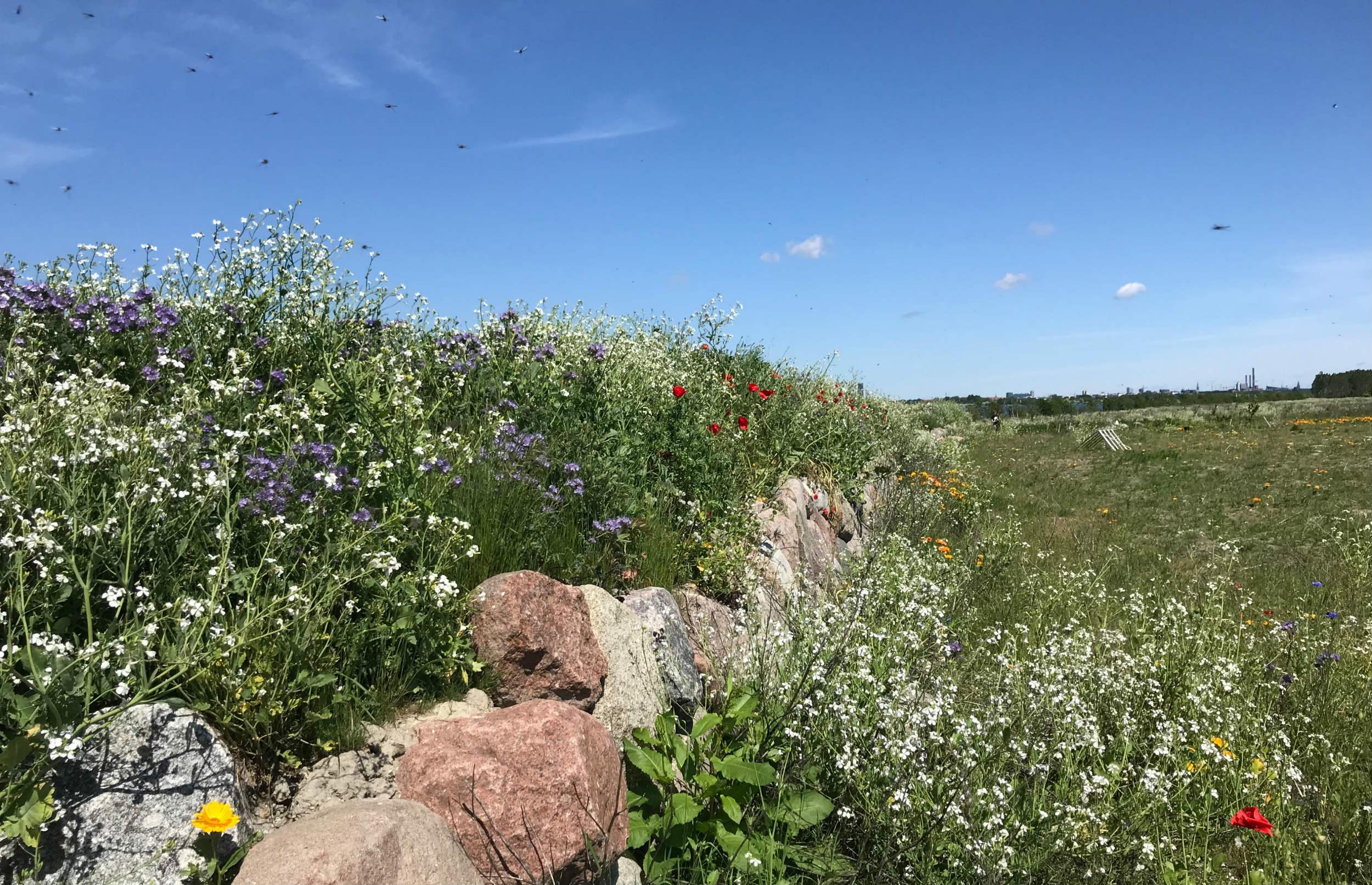 Nyt ambitiøst partnerskab skal styrke biodiversiteten i København