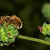 Kommune under kritik: Aflivede 100.000 harmløse bier