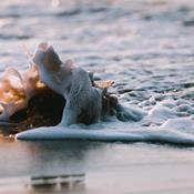 Tisvildeleje strand bliver fri for skadelige cigaretskod