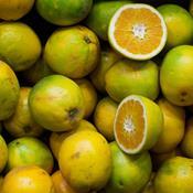 Slut med chlorpyrifos i frugt og grønt i Danmark