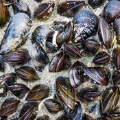 Forurening af havet