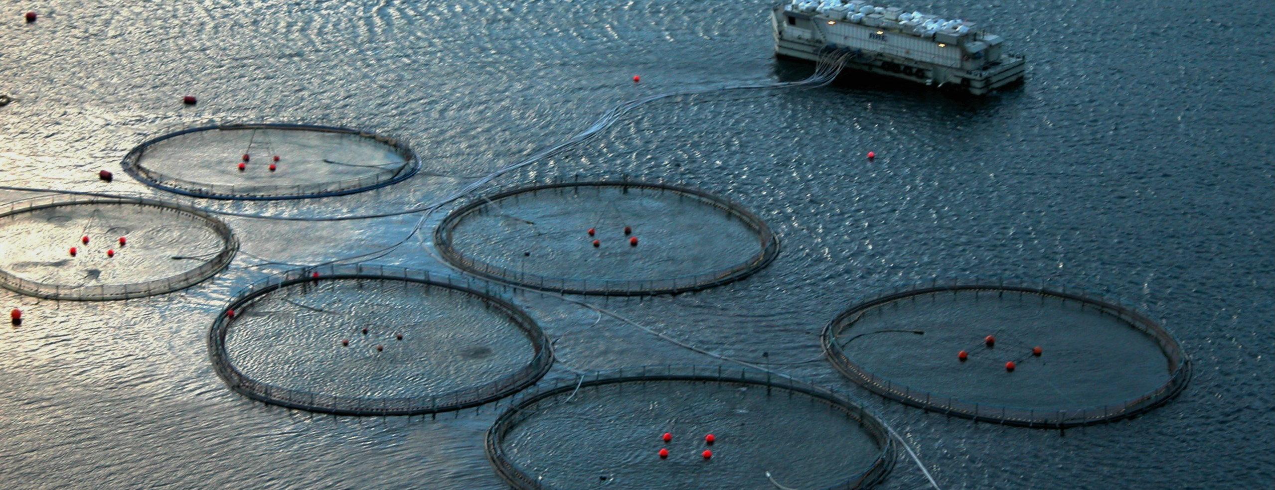 Stop for nye havbrug i Danmark: De sviner havet til