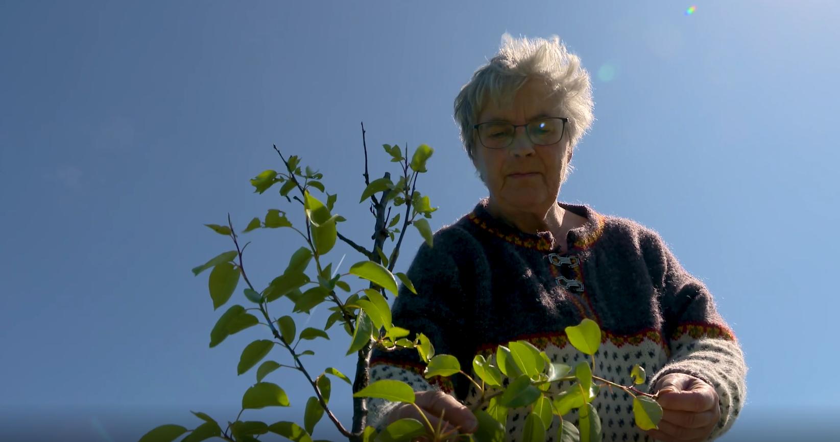 Bedstemor planter 350 træer i sin baghave