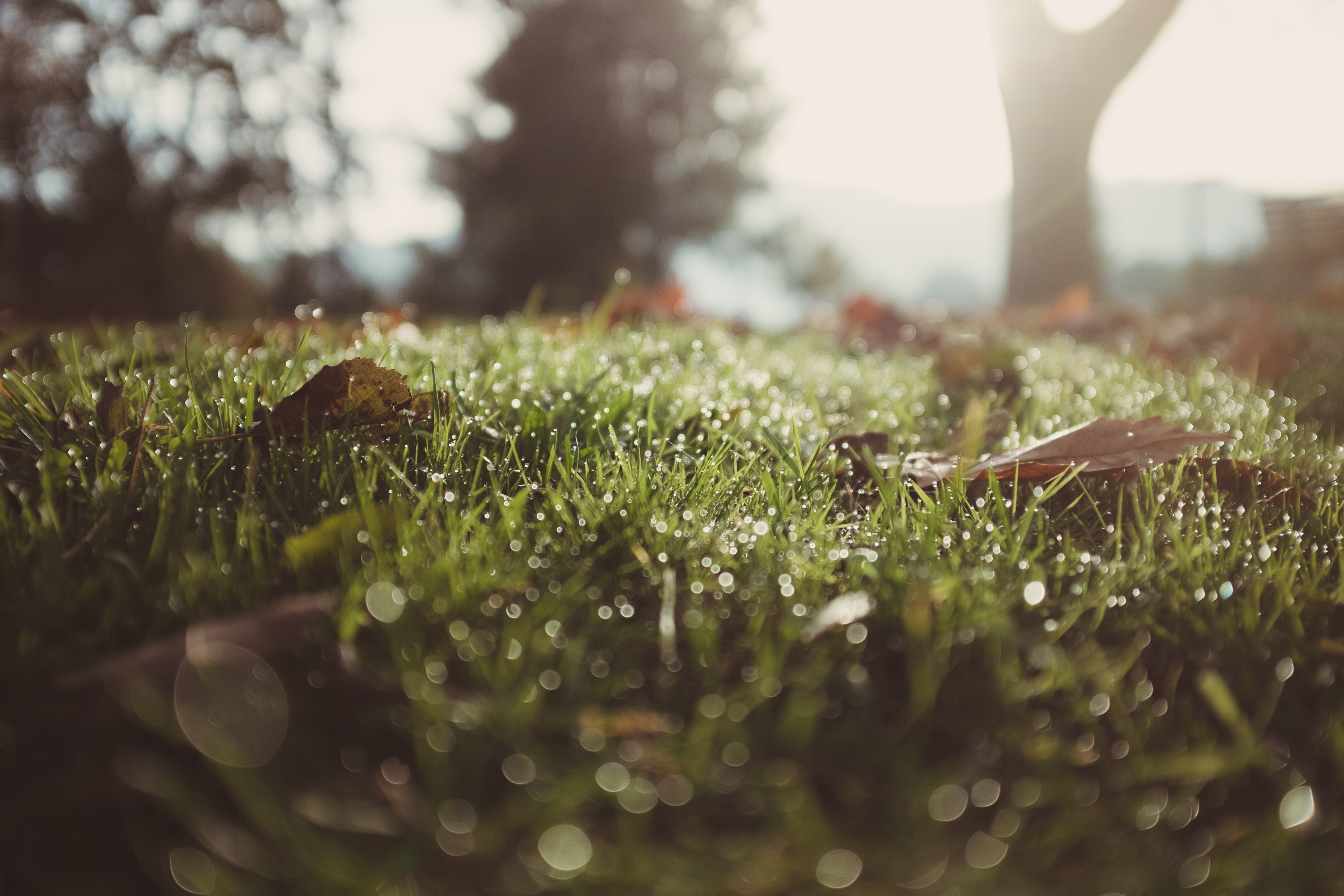 Det kan du bruge regnen til i din have