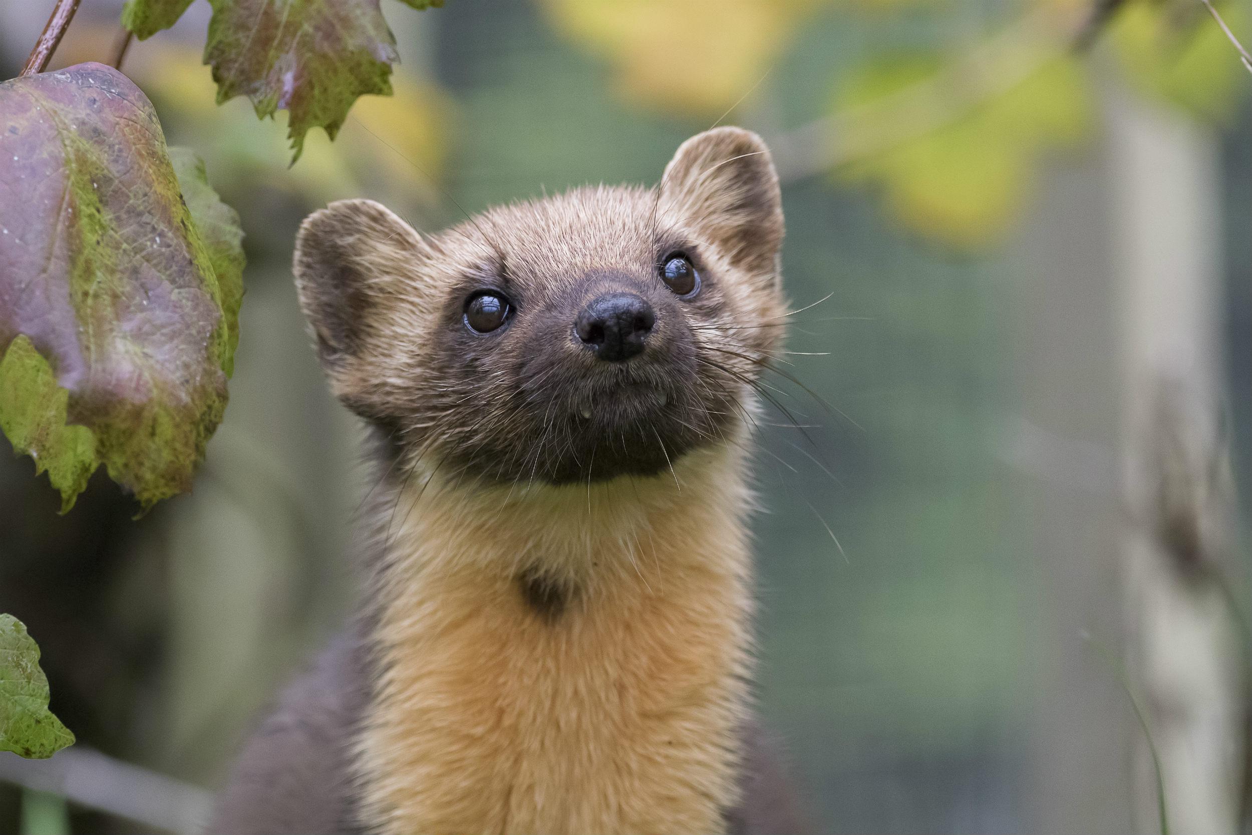 Mens arterne forsvinder: Regeringen udskyder redningsplan for naturen