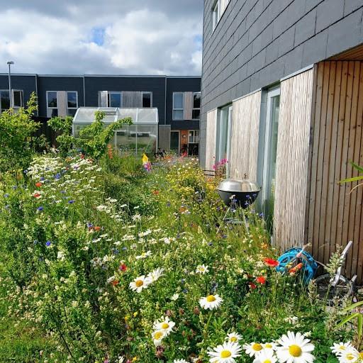 Haveejer såede vilde blomster i haven – så fulgte grundejerforeningen trop