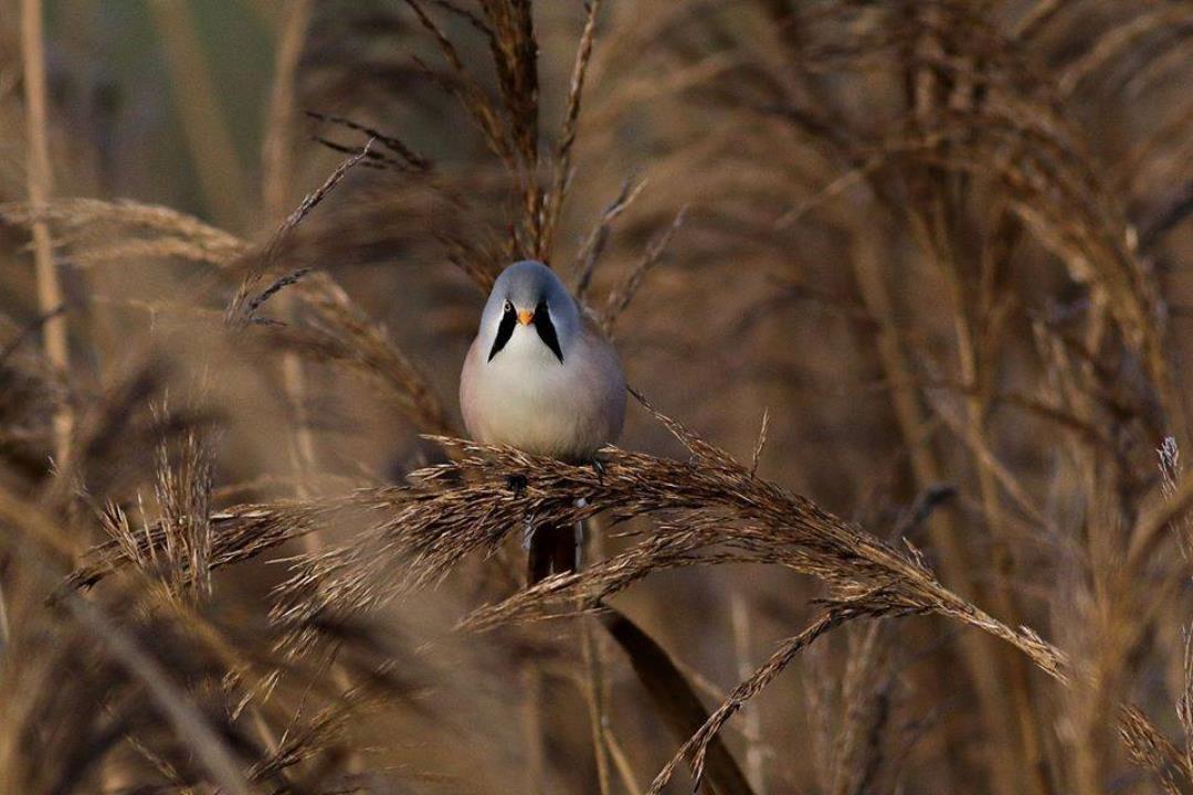 Fugle og natur ved Kølsen Enge