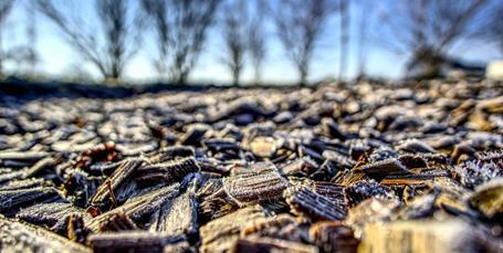 Lovkrav til biomasse løser ikke problemet