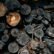 Forkert kun at satse på biomasse i stedet for kul