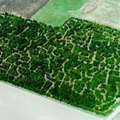 Verdens største labyrint med i Giftfri Have