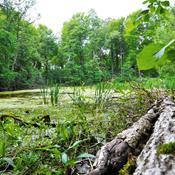 Allindelille: Sjældne arter spirer frem igen