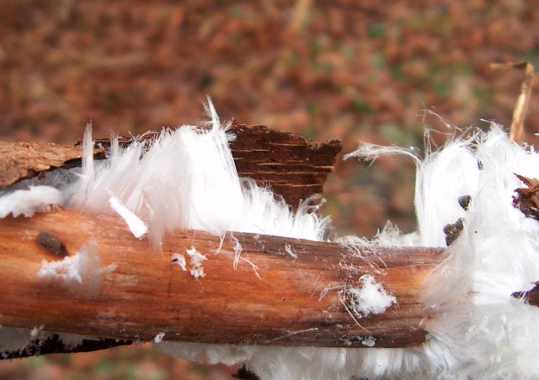 Julefugletur til Vestskoven fra Naturcenter Herstedhøje