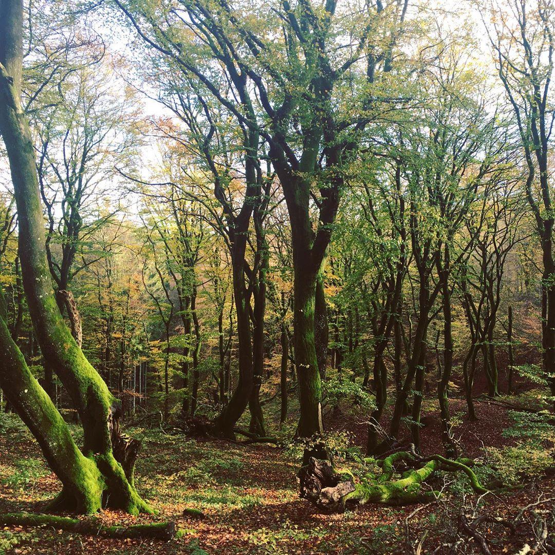 13 vilde og vidunderlige skove i Danmark