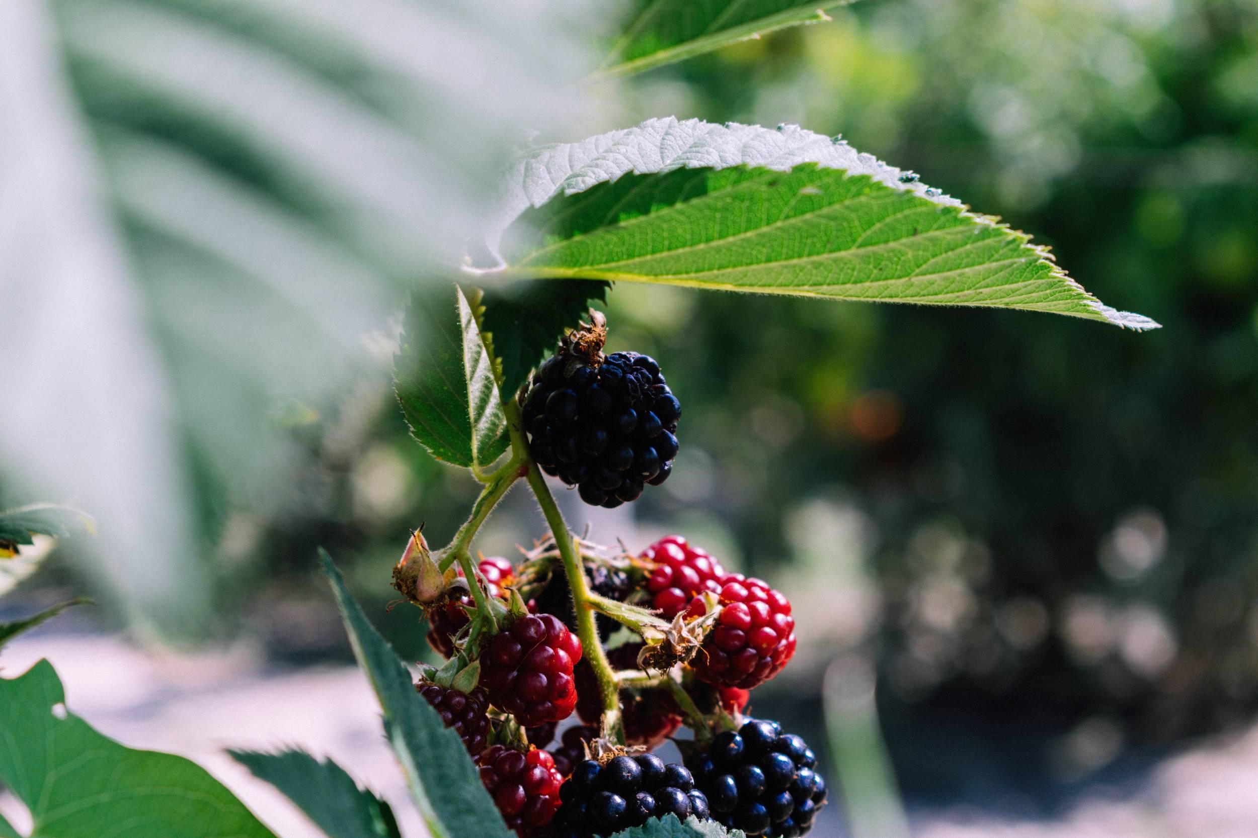Hjælp naturen: Træer og buske du skal plante i din have