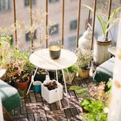 Gør din altan til et blomsterparadis: Plant til sommerfugle og bier