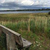 Sjælden naturperle på den danske kyst er fredet