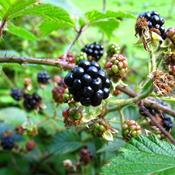 Naturens Dag: 4 naturoplevelser i Nordjylland