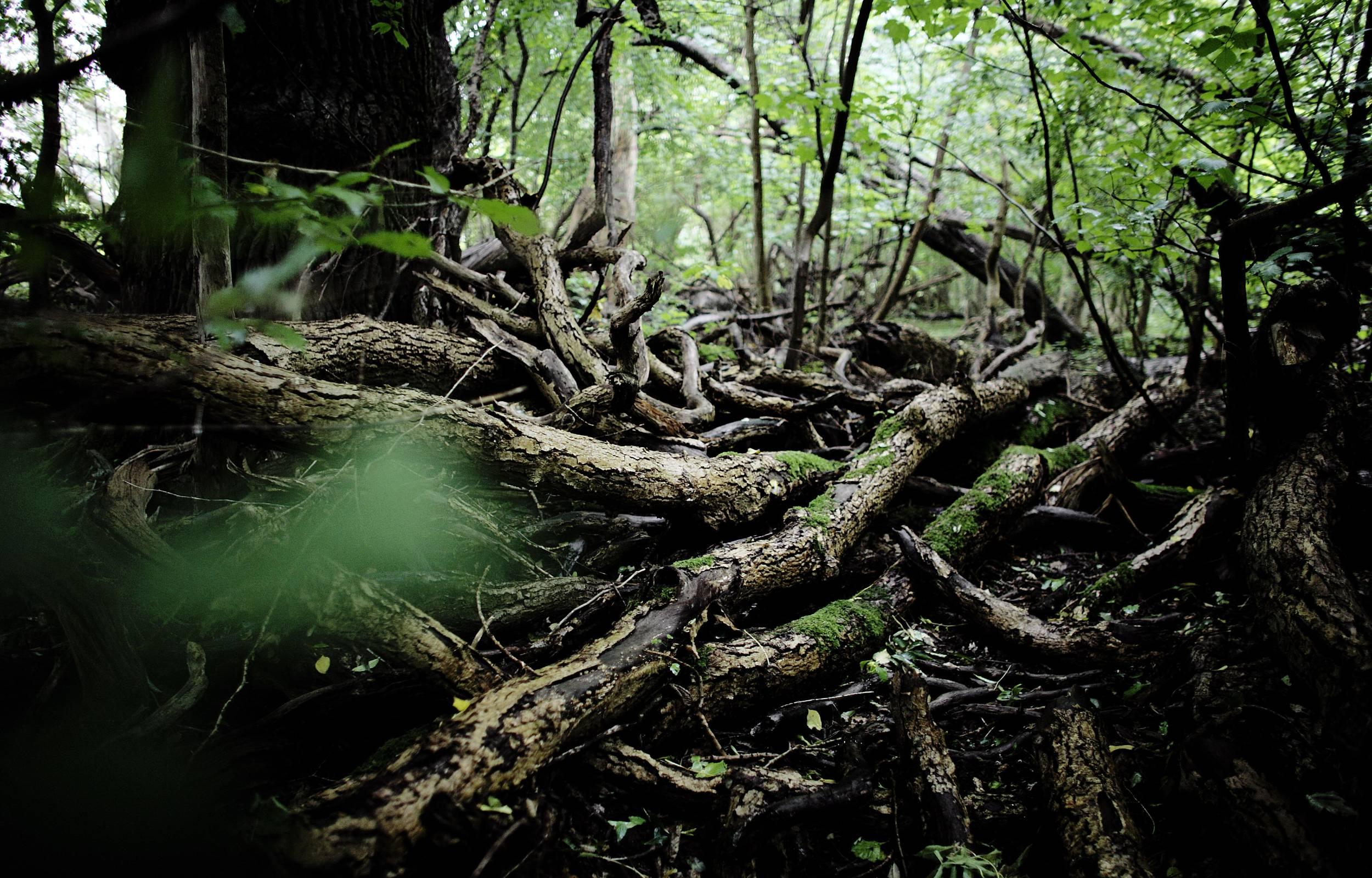 Ny aftale sikrer mere urørt skov: Men der er lang vej igen