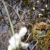 Danmark dumper i 17 ud af 19 internationale naturmål