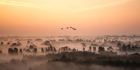 Naturen får et tiltrængt frirum i de nye naturnationalparker