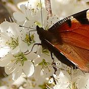 Rema 1000 og biodiversiteten
