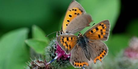 Tag på sommerfuglejagt!