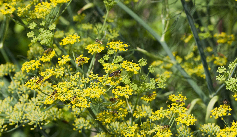 Få en vildere have: 6 ting du kan gøre i haven i marts
