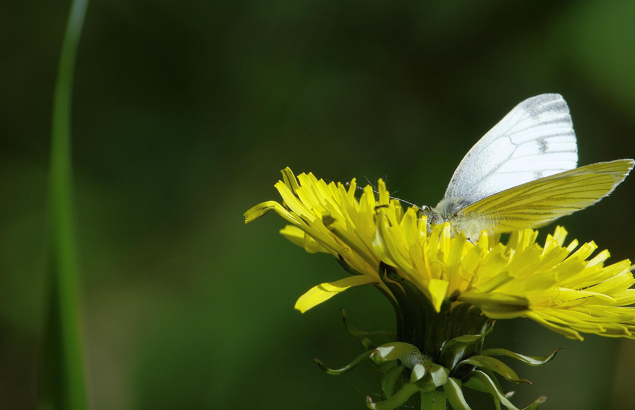 Haveejere stoppede med sprøjtegift: Insekterne strømmede til