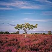 7 naturseværdigheder i Midtjylland