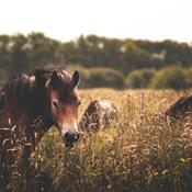 Dyreetisk Råd: Dyrene har et godt liv i naturen