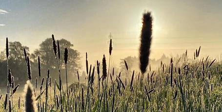 6 smukke naturoplevelser i Syd- og Sønderjylland