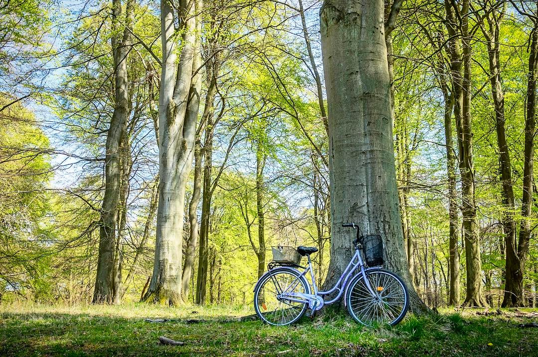 13 vidunderlige skove i Danmark