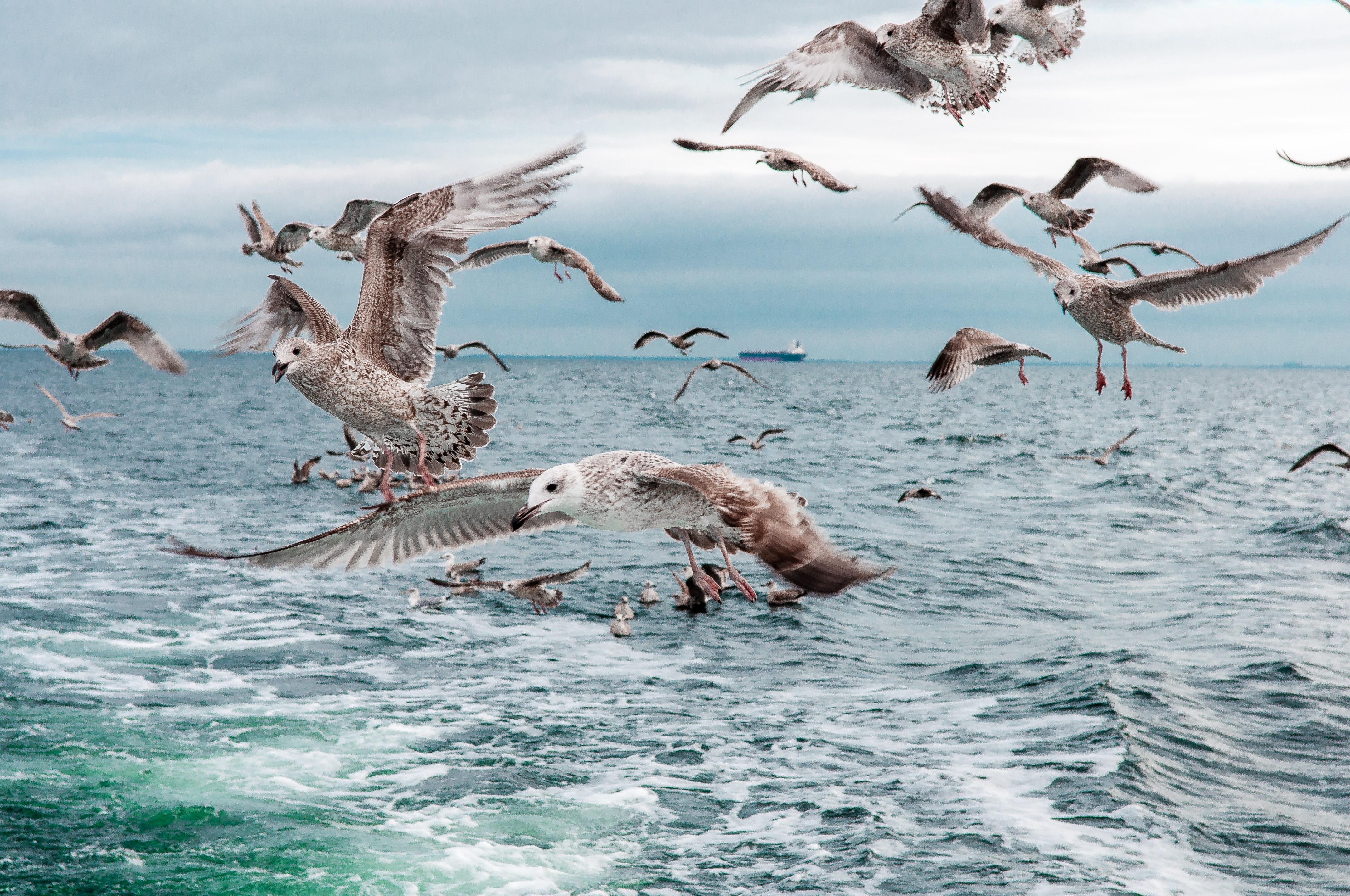 Fra Pløresund til Danmarks sundeste hav