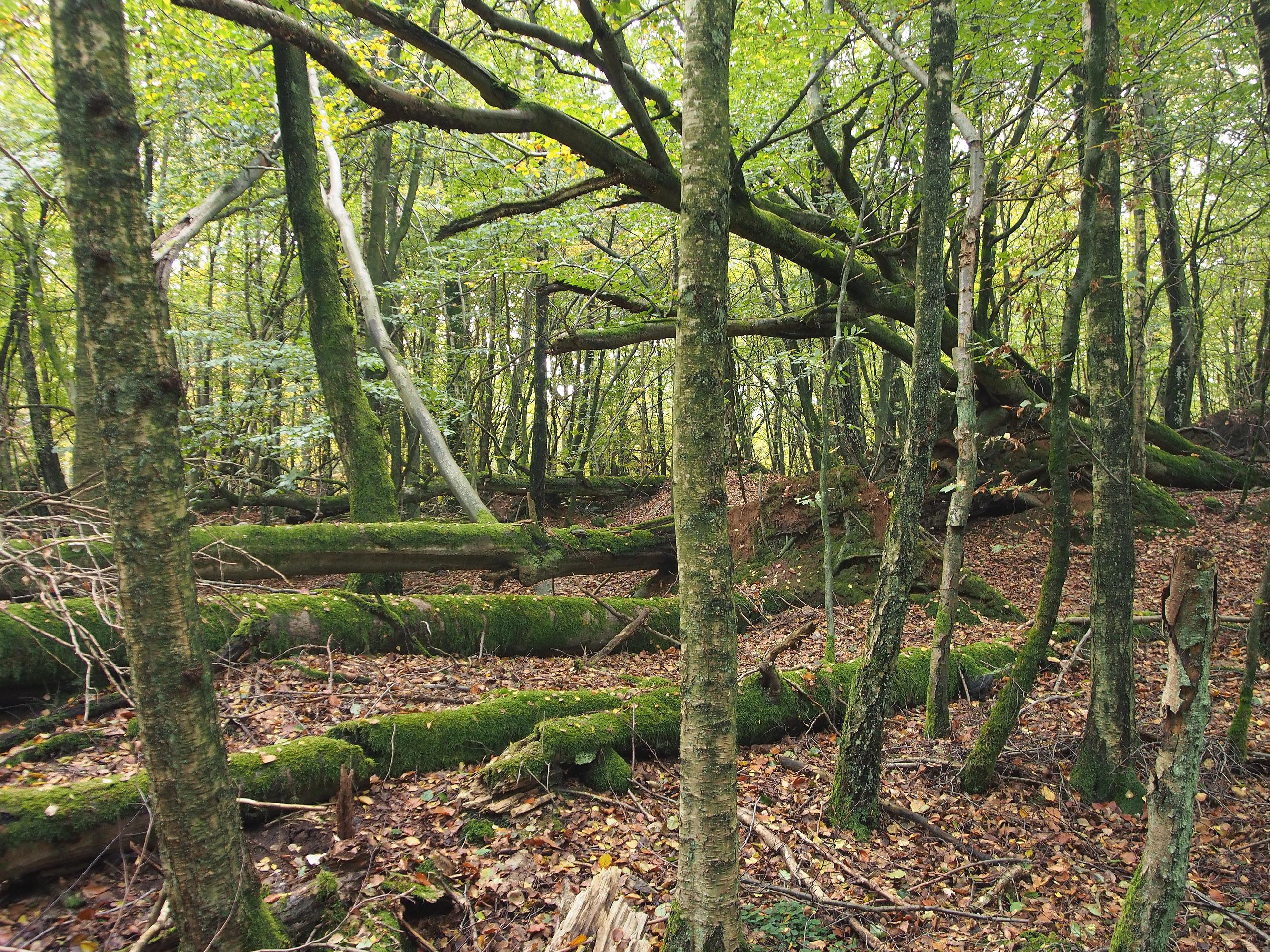 Orkan skabte eventyrlig urørt skov