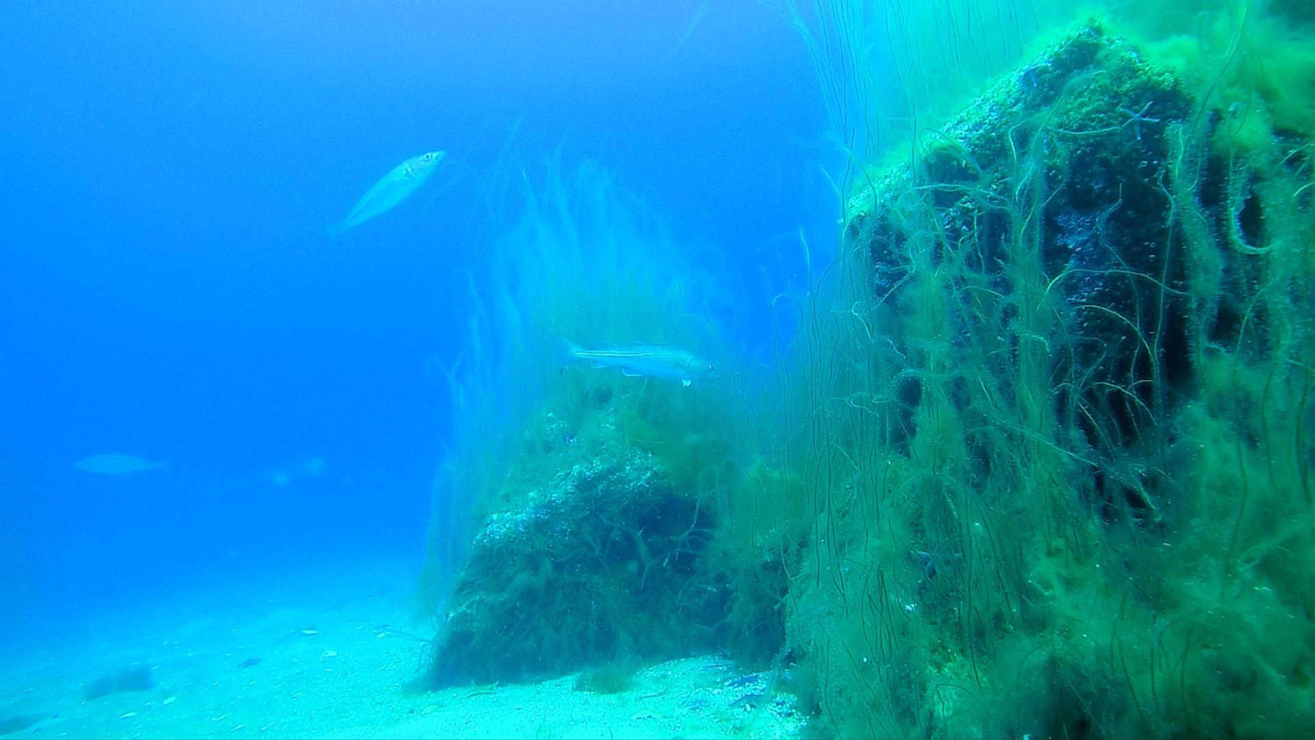 Stenrev er istidslandskaber under havoverfladen