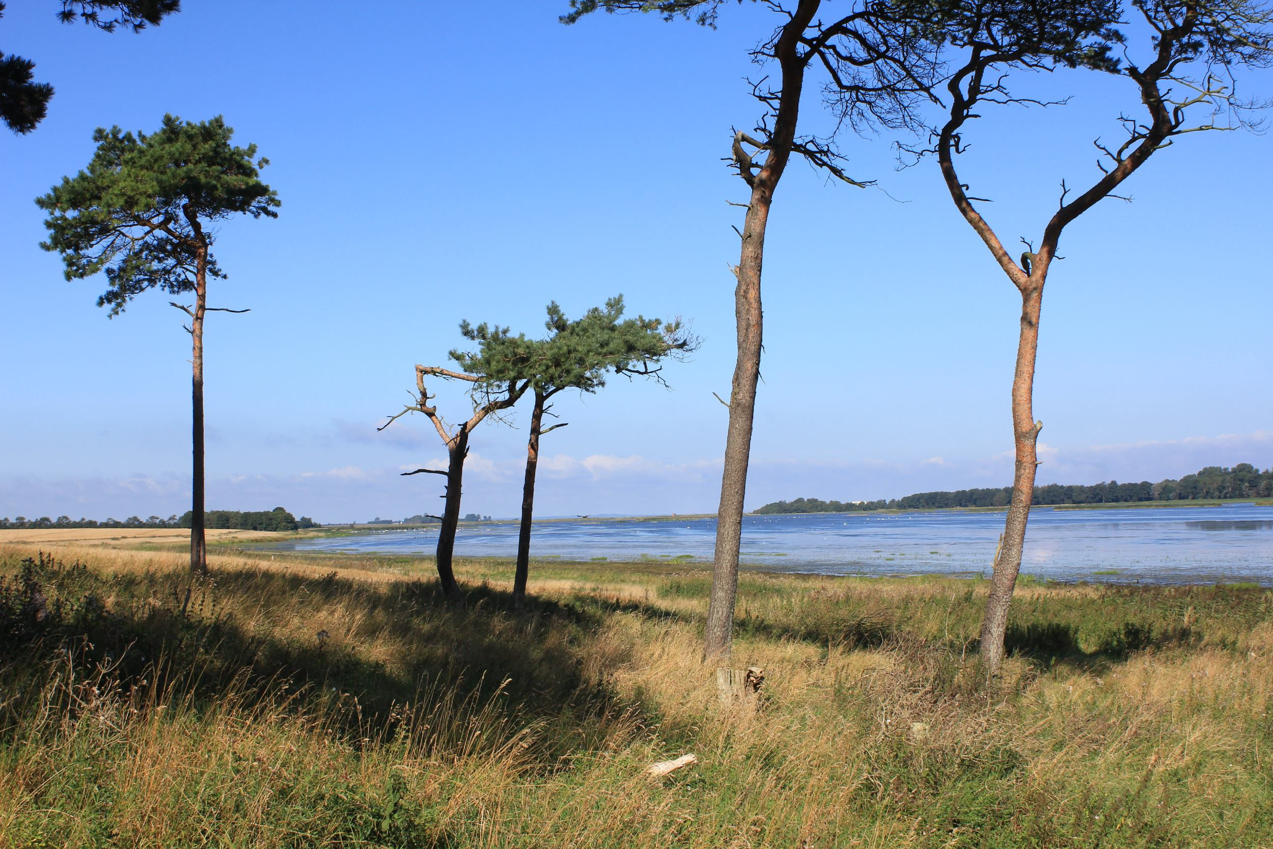Er der laguner i Danmark?