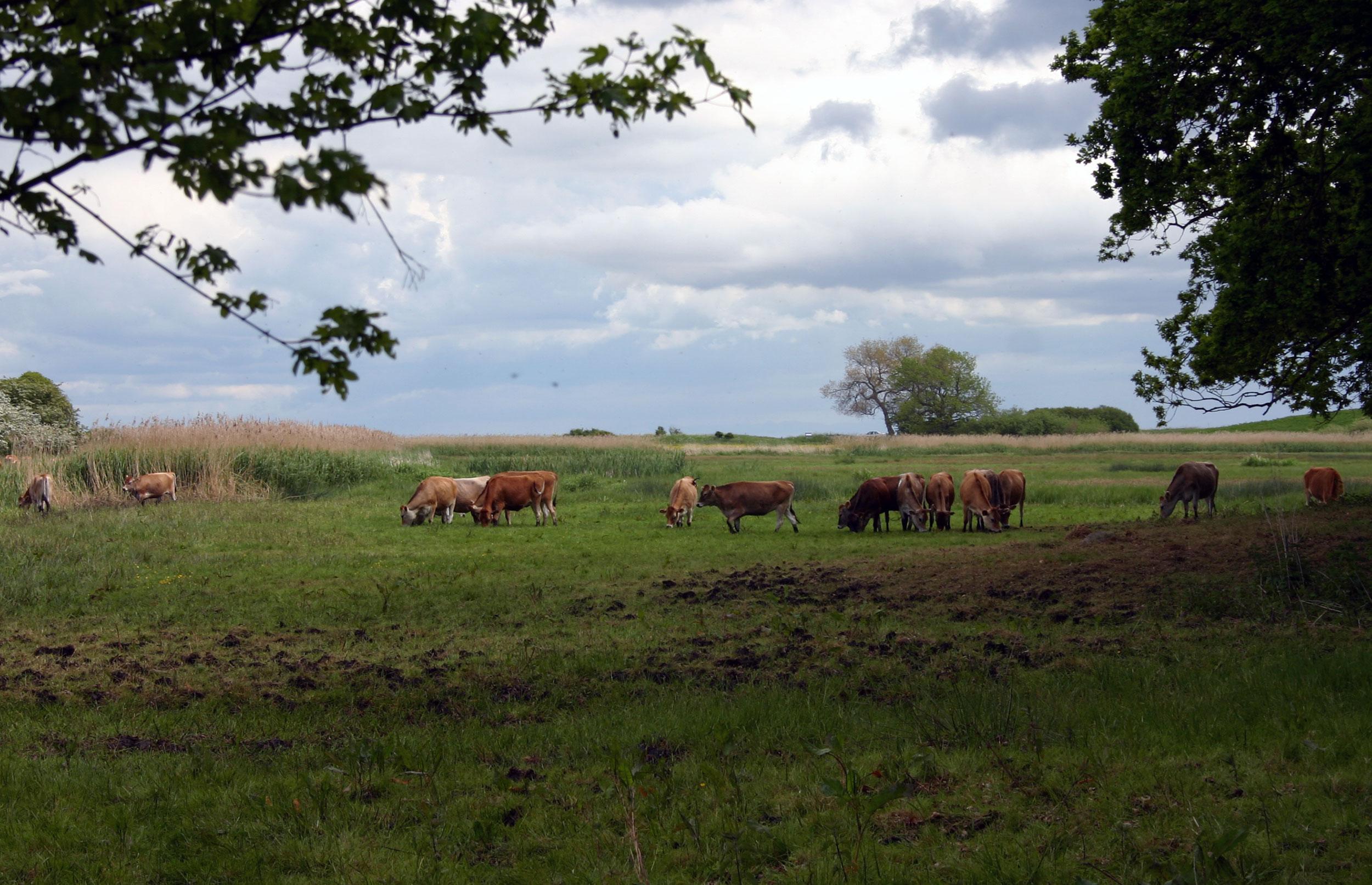 DN: Gør landbrugsstøtten grønnere