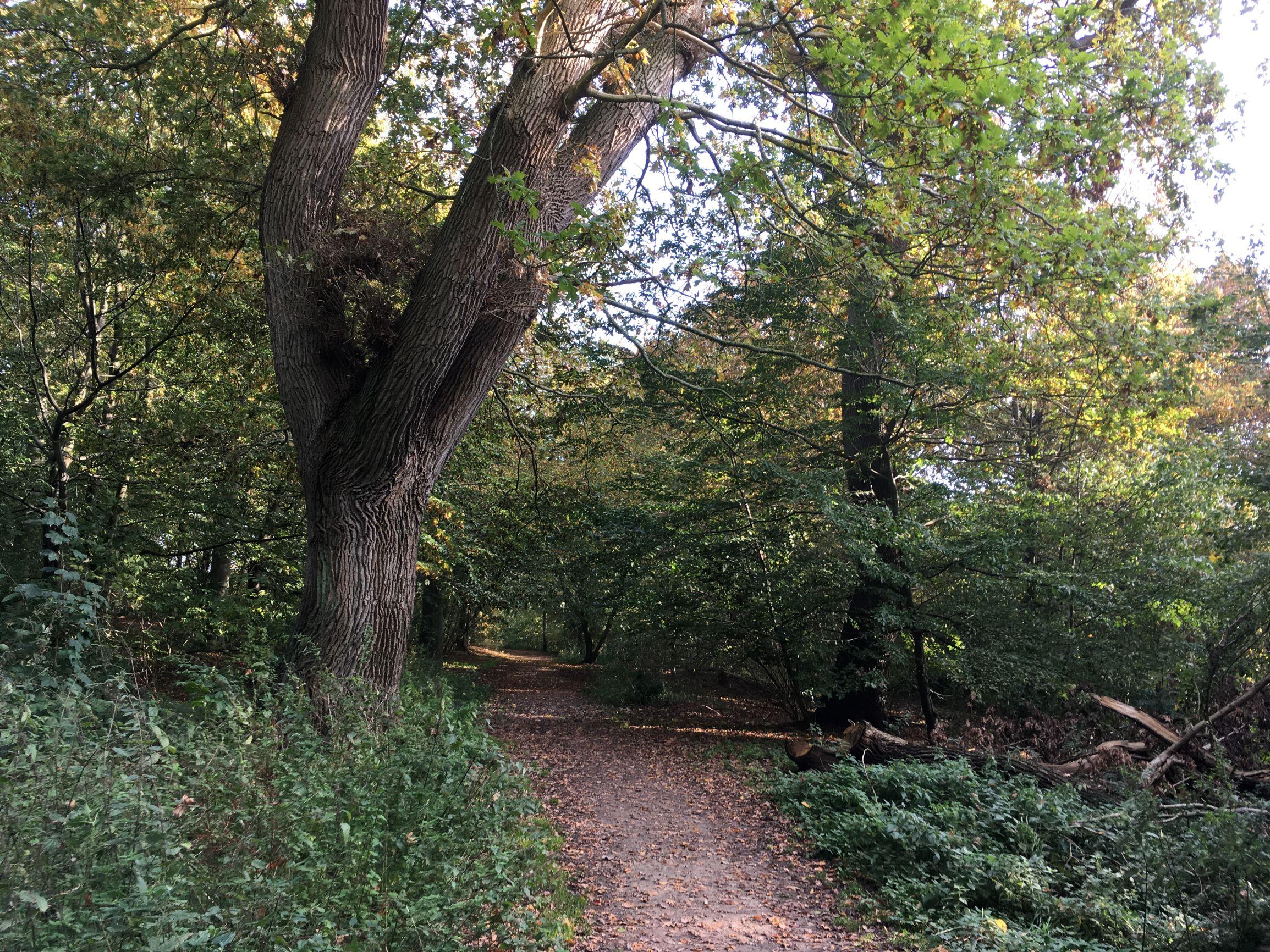Unik løvskov med 350 år gamle træer og sjældne arter skal fredes