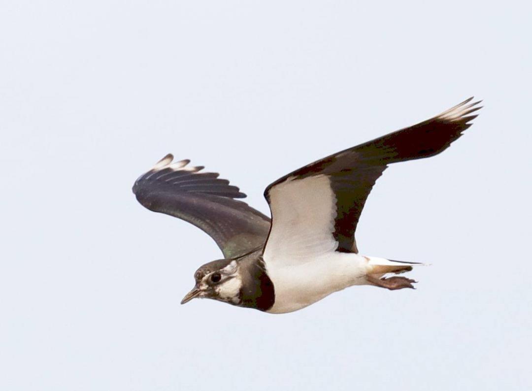 Vinterfugletur på Monnet